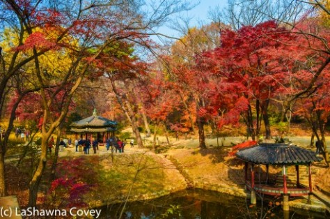 Changdeokgung Palace by day and night-16