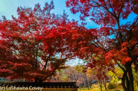 Changdeokgung Palace by day and night-9