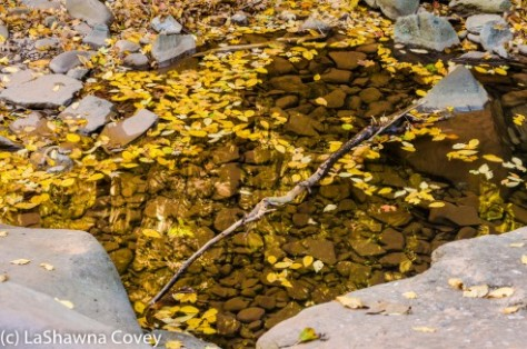 Hudson Valley hiking Kaaterskill Falls-5