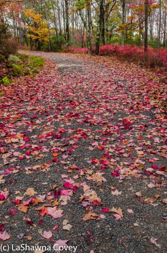 Hudson Valley hiking Old Minnewaska Trail-10