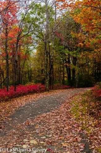 Hudson Valley hiking Old Minnewaska Trail-20