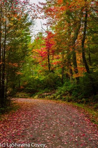 Hudson Valley hiking Old Minnewaska Trail-3