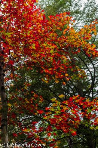 Hudson Valley hiking Old Minnewaska Trail-4