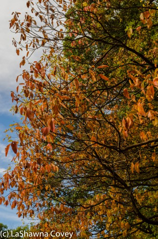Hudson Valley leaf peeping-12