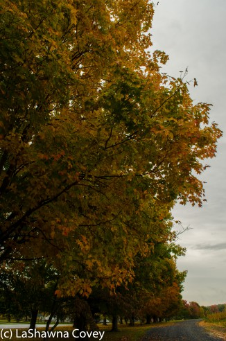 Hudson Valley leaf peeping-4