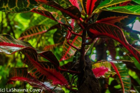Fiji Flora-1