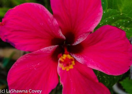 Fiji Flora-12