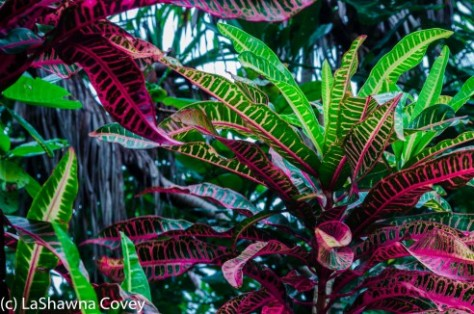 Fiji Flora-2