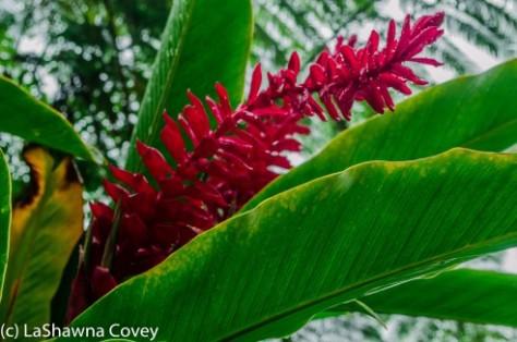 Fiji Flora-4
