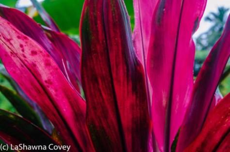 Fiji Flora-8