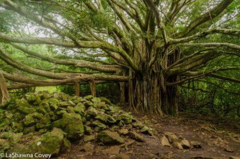 Haleakala National Park hiking-6