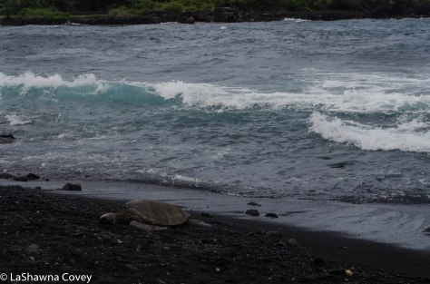 Big Island beaches-7