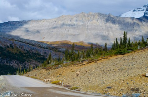 Icefields Parkway-6