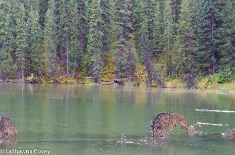 Maligne Lake-5